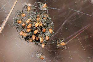"""A spokesman described the ruling as """"a goddamn spider convention"""""""
